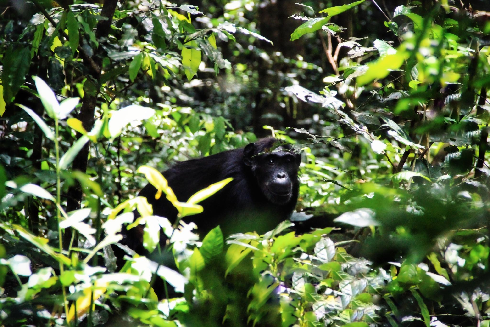 uganda-dzungla