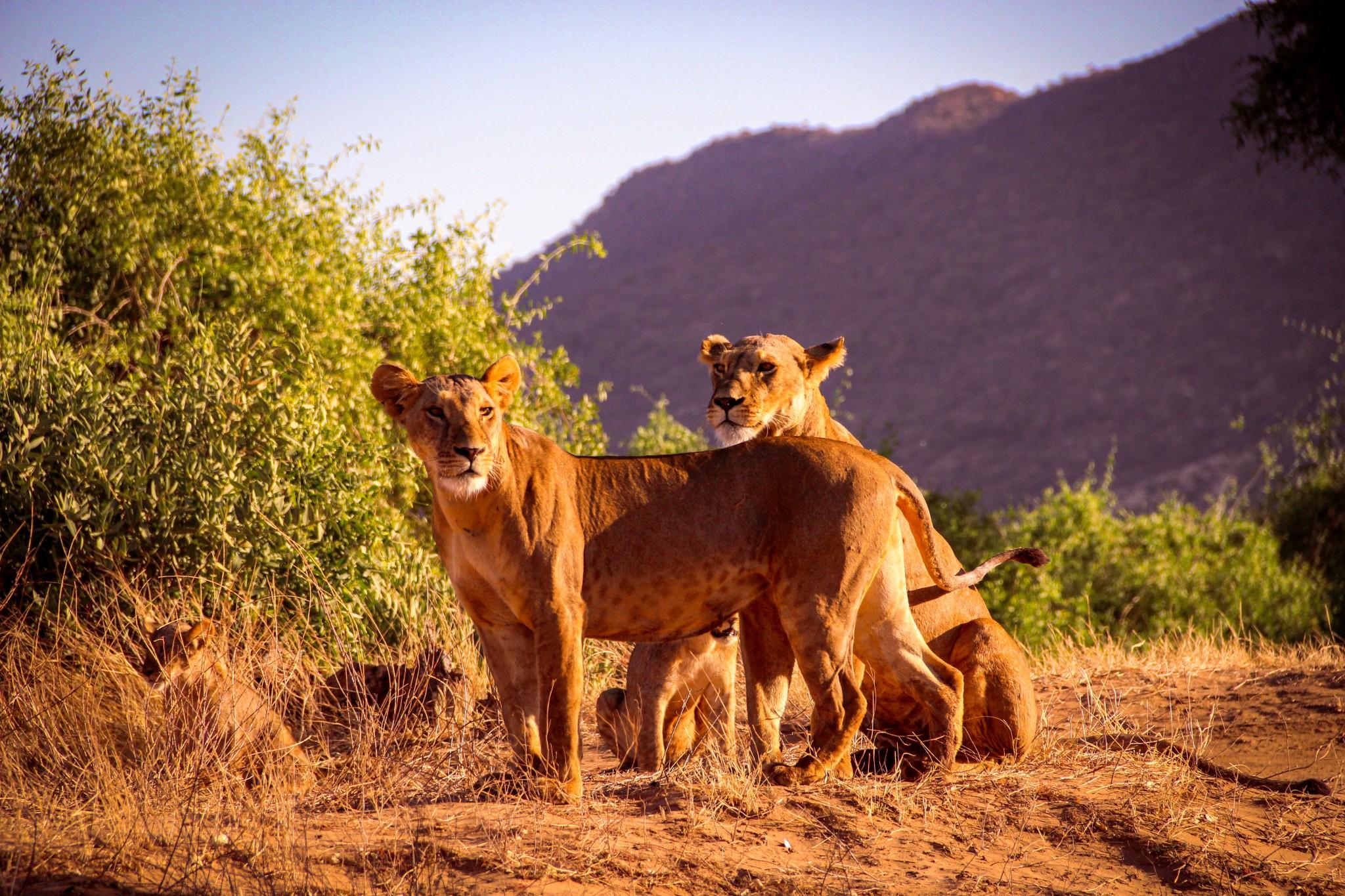 kenia-safari